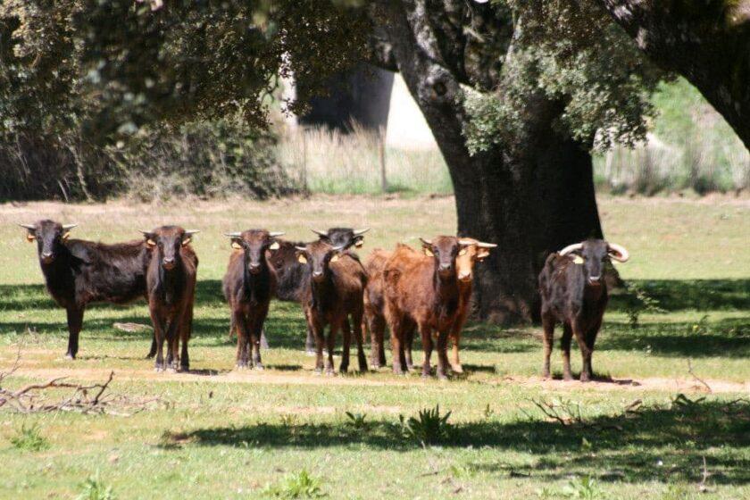 visita ganaderia toros bravos ronda
