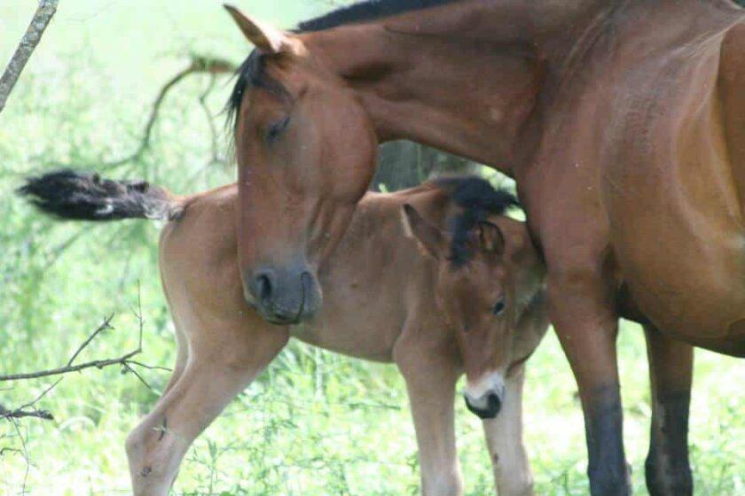 visita a ganadería de toro bravo reservatauro