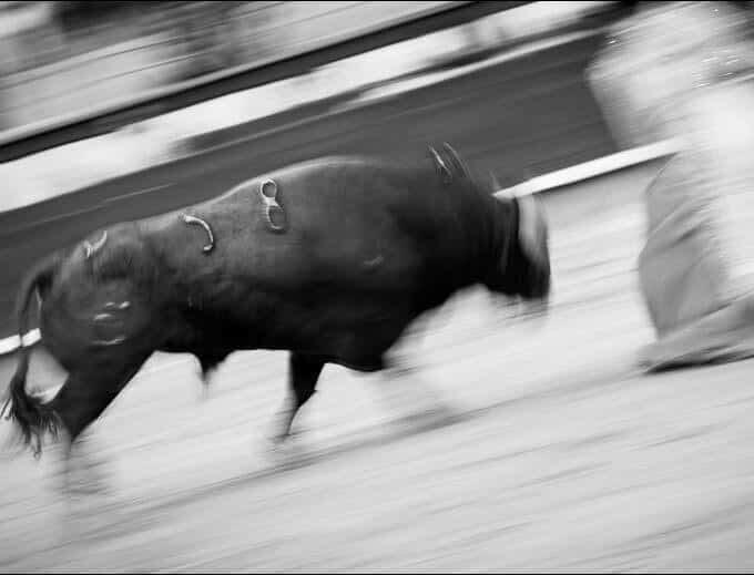 Fotografía Toro 58 de Juan Pelegrín