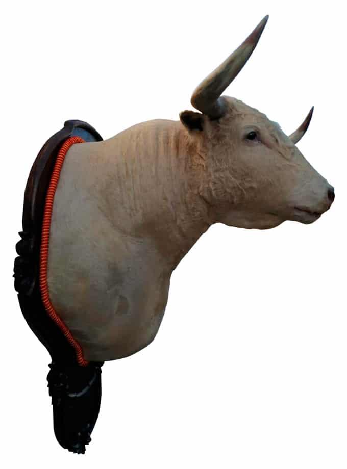 Brave Bull's head