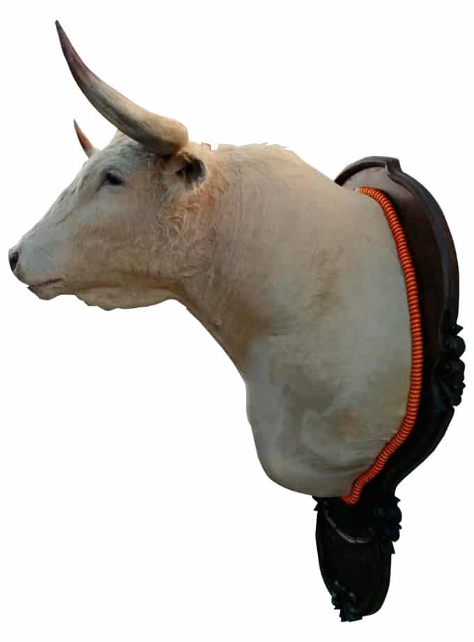 Bull's head from the Tomás Prieto de la Cal livestock